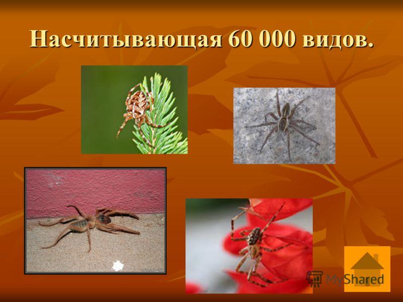 Сколько существует видов пауков? Ответ Ответ