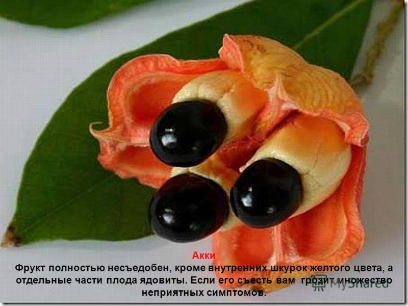 Рамбутан Слово рамбутан означает волосатый, так как фрукт весь покрыт волосками. Внутри этой невкусной оболочки находится сладкий плод с единственной косточкой внутри. Внешне,напоминают каштаны красного цвета.