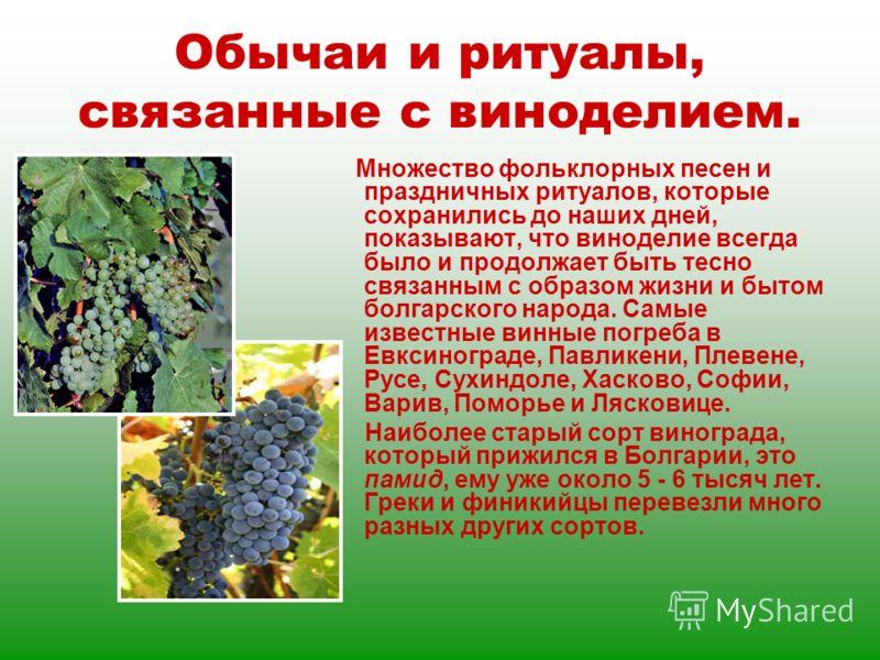 Обычаи и ритуалы, связанные с виноделием. Множество фольклорных песен и праздничных ритуалов, которые сохранились до наших дней, показывают, что виноделие всегда было и продолжает быть тесно связанным с образом жизни и бытом болгарского народа. Самые