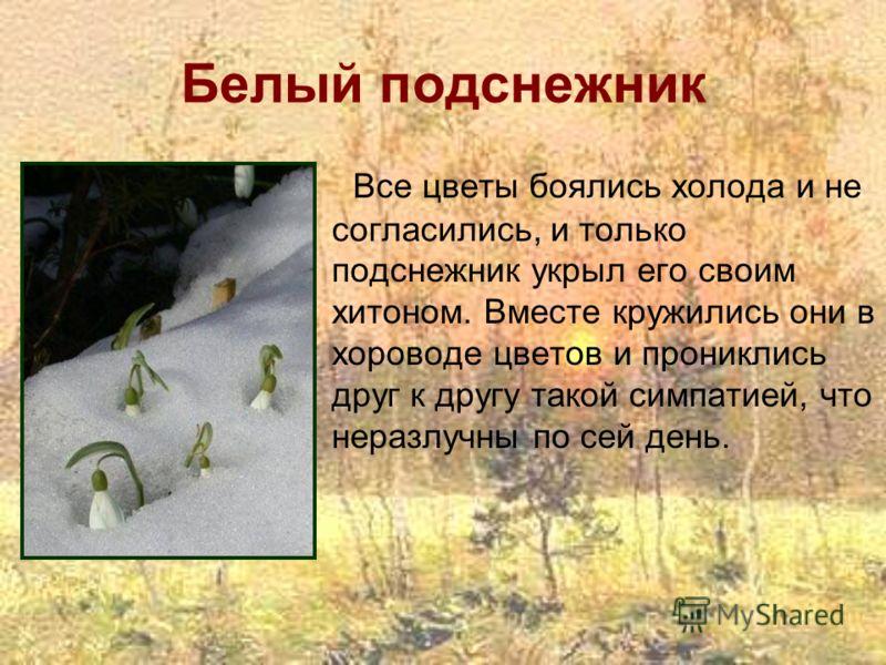 Белый подснежник Все цветы боялись холода и не согласились, и только подснежник укрыл его своим хитоном. Вместе кружились они в хороводе цветов и прониклись друг к другу такой симпатией, что неразлучны по сей день.