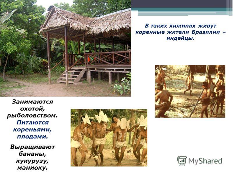 В таких хижинах живут коренные жители Бразилии – индейцы. Занимаются охотой, рыболовством. Питаются кореньями, плодами. Выращивают бананы, кукурузу, маниоку.