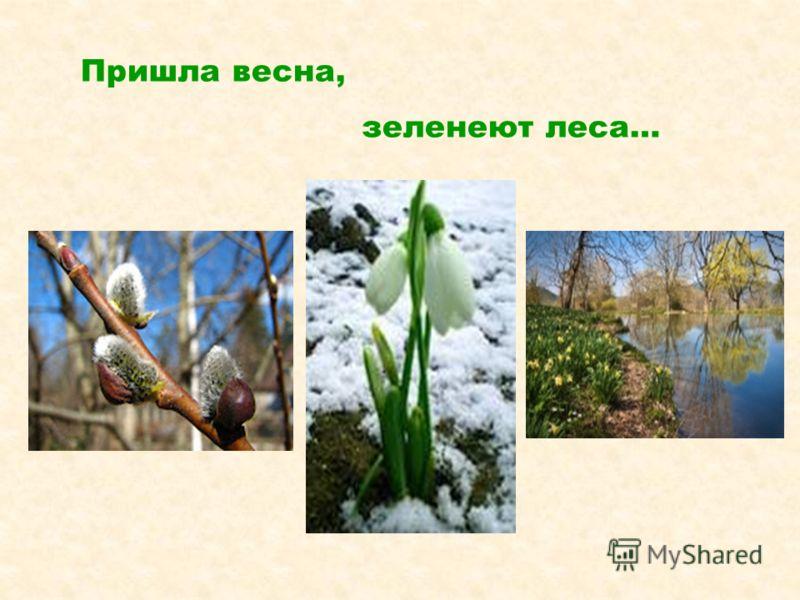 Пришла весна, зеленеют леса…