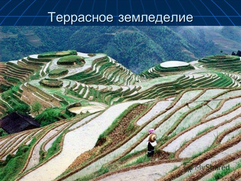Террасное земледелие