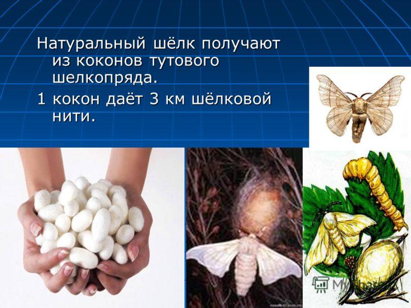 Натуральный шёлк получают из коконов тутового шелкопряда. 1 кокон даёт 3 км шёлковой нити.