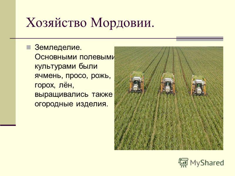 Хозяйство Мордовии. Земледелие. Основными полевыми культурами были ячмень, просо, рожь, горох, лён, выращивались также огородные изделия.