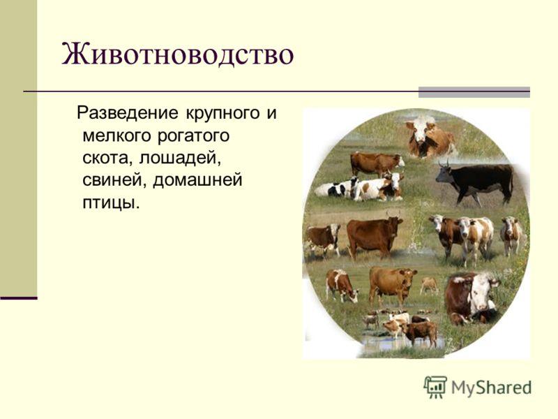 Животноводство Разведение крупного и мелкого рогатого скота, лошадей, свиней, домашней птицы.