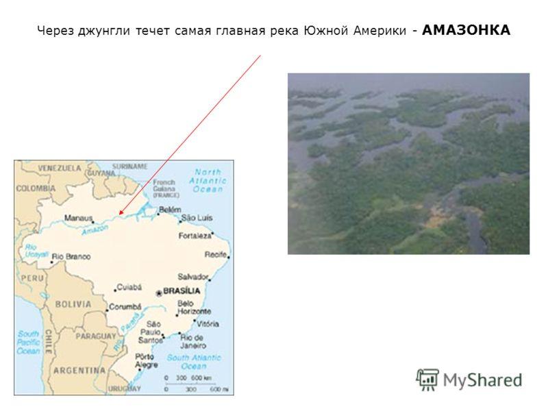 Через джунгли течет самая главная река Южной Америки - АМАЗОНКА