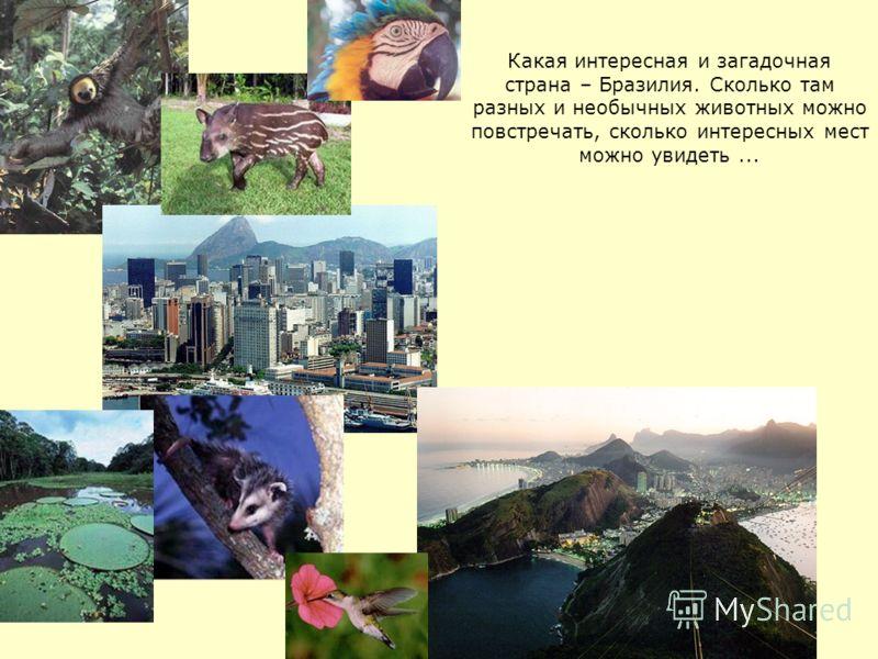Какая интересная и загадочная страна – Бразилия. Сколько там разных и необычных животных можно повстречать, сколько интересных мест можно увидеть...