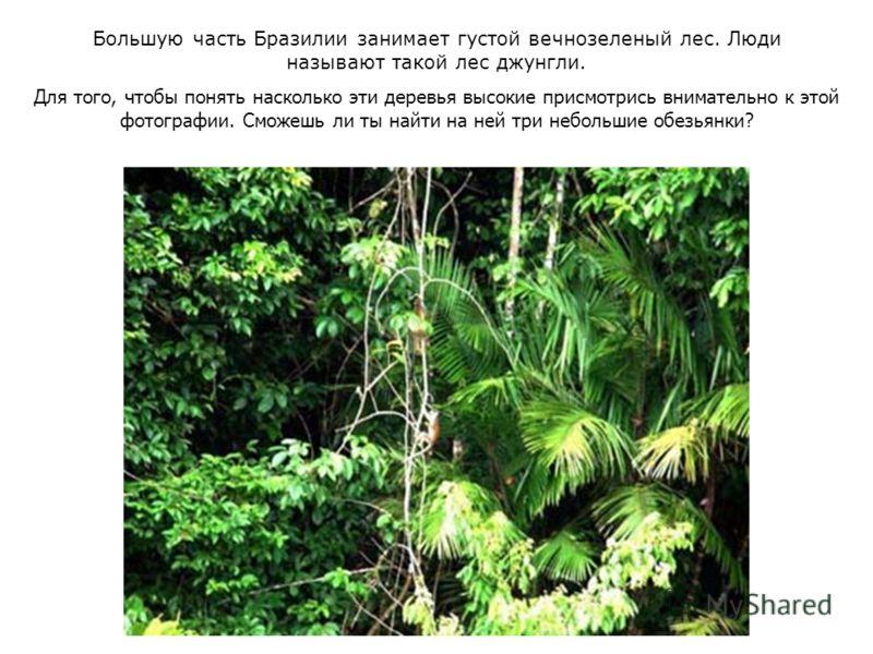 Большую часть Бразилии занимает густой вечнозеленый лес. Люди называют такой лес джунгли. Для того, чтобы понять насколько эти деревья высокие присмотрись внимательно к этой фотографии. Сможешь ли ты найти на ней три небольшие обезьянки?