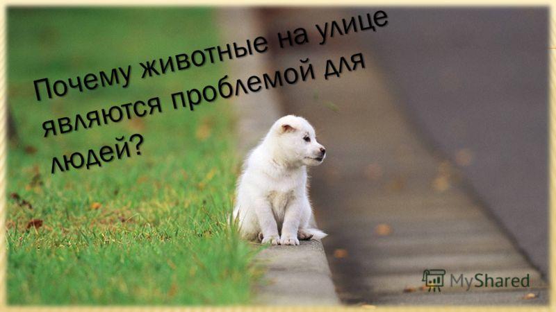 Почему животные на улице являются проблемой для людей?