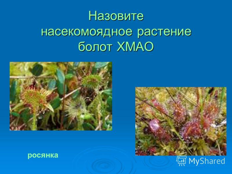 Назовите насекомоядное растение болот ХМАО росянка