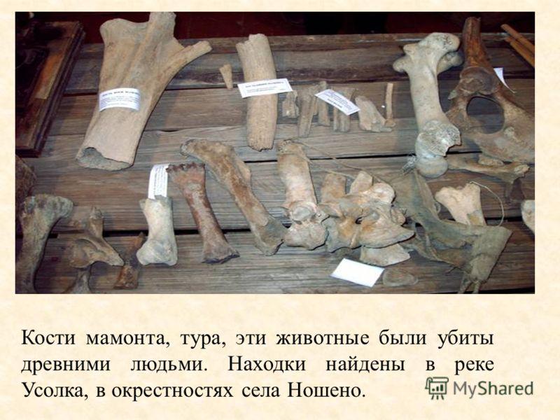 Кости мамонта, тура, эти животные были убиты древними людьми. Находки найдены в реке Усолка, в окрестностях села Ношено.