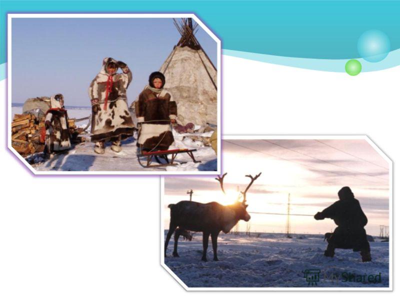 жизнью народов с севера знакомство