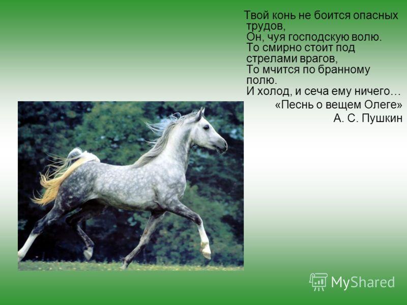 Твой конь не боится опасных трудов, Он, чуя господскую волю. То смирно стоит под стрелами врагов, То мчится по бранному полю. И холод, и сеча ему ничего… «Песнь о вещем Олеге» А. С. Пушкин