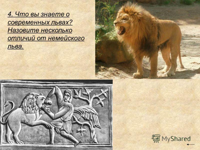 4. Что вы знаете о современных львах? Назовите несколько отличий от немейского льва.