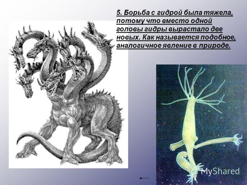 5. Борьба с гидрой была тяжела, потому что вместо одной головы гидры вырастало две новых. Как называется подобное, аналогичное явление в природе.