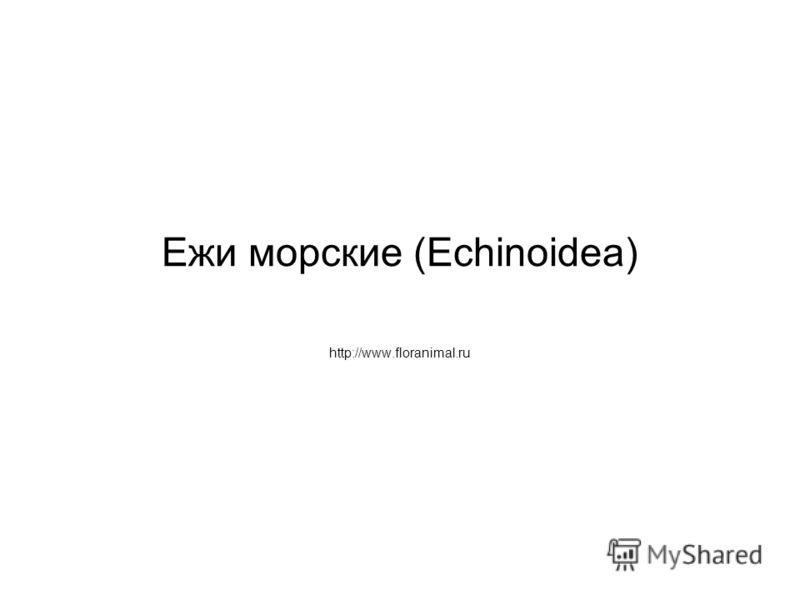 Ежи морские (Echinoidea) http://www.floranimal.ru