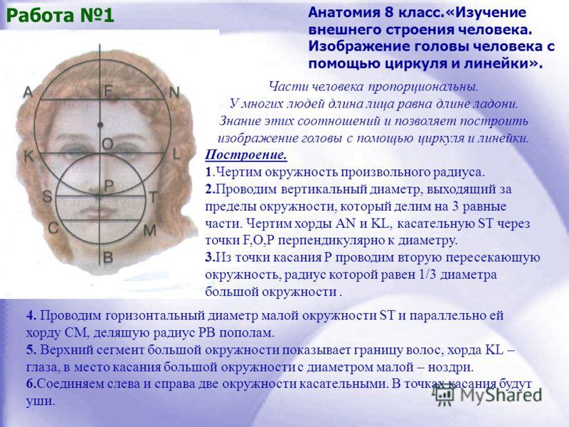 Части человека пропорциональны. У многих людей длина лица равна длине ладони. Знание этих соотношений и позволяет построить изображение головы с помощью циркуля и линейки. Построение. 1.Чертим окружность произвольного радиуса. 2.Проводим вертикальный