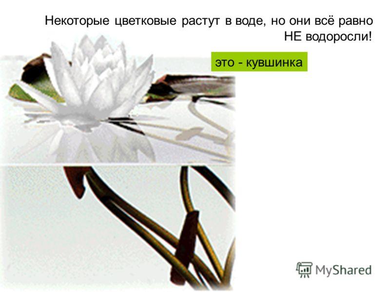 Некоторые цветковые растут в воде, но они всё равно НЕ водоросли! это - кувшинка