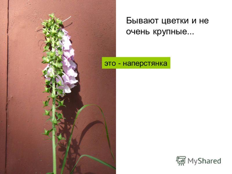 Бывают цветки и не очень крупные... это - наперстянка