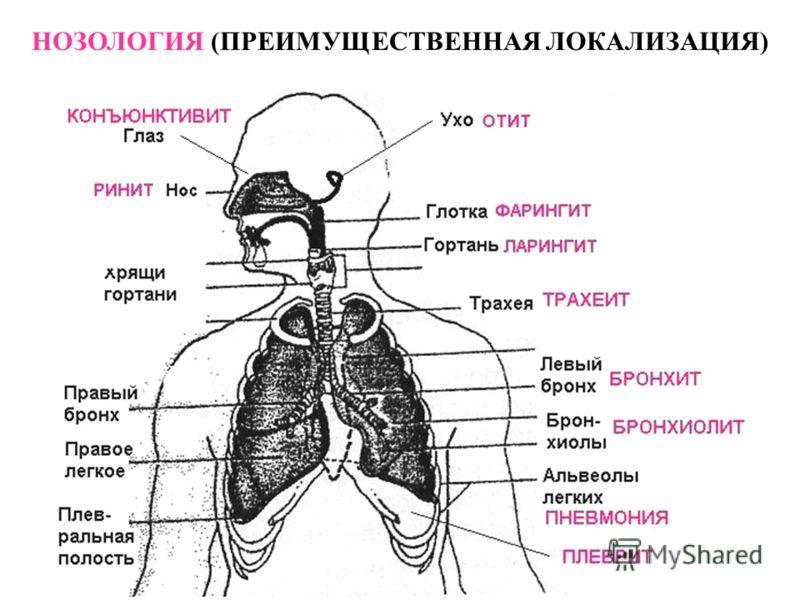 Заболевания Вызываемые Вирусами Презентация