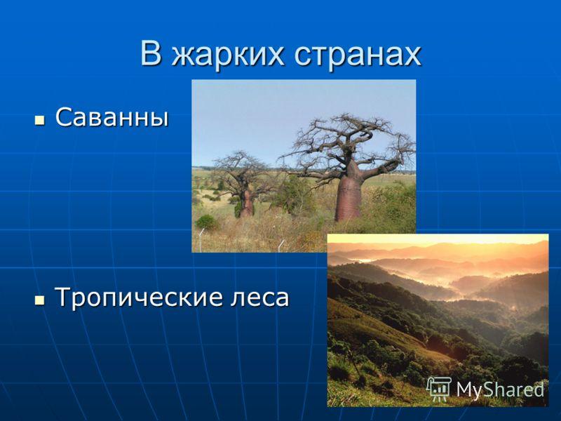 В жарких странах Саванны Саванны Тропические леса Тропические леса