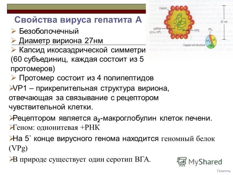 Вакцинация от гепатита b за и против