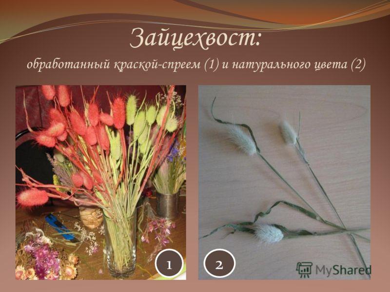 Зайцехвост: обработанный краской-спреем (1) и натурального цвета (2) 12