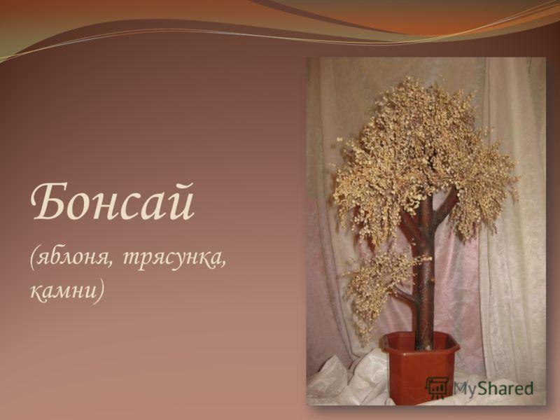 Бонсай (яблоня, трясунка, камни)