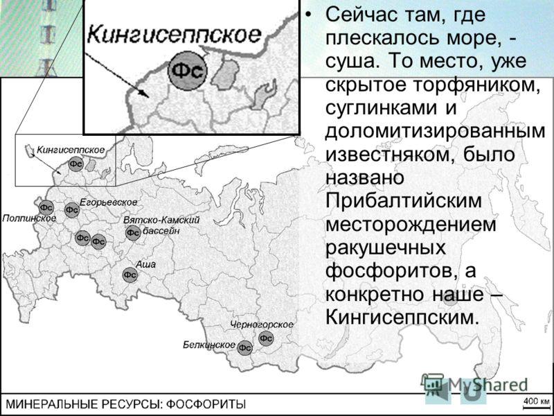 Сейчас там, где плескалось море, - суша. То место, уже скрытое торфяником, суглинками и доломитизированным известняком, было названо Прибалтийским месторождением ракушечных фосфоритов, а конкретно наше – Кингисеппским.