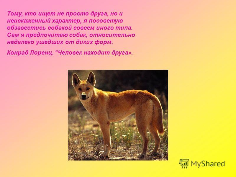 Тому, кто ищет не просто друга, но и неискаженный характер, я посоветую обзавестись собакой совсем иного типа. Сам я предпочитаю собак, относительно недалеко ушедших от диких форм. Конрад Лоренц. Человек находит друга».