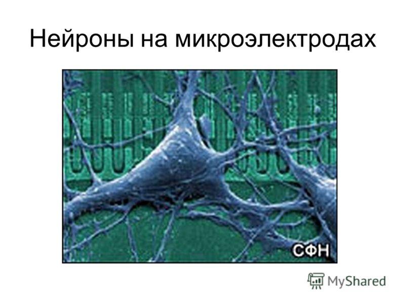 Нейроны на микроэлектродах