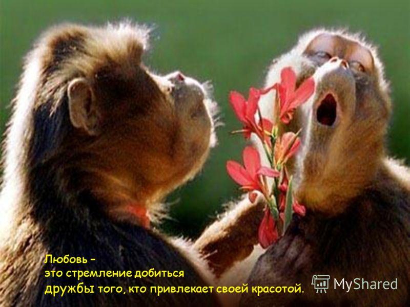 Любовь – это стремление добиться дружбы того, кто привлекает своей красотой.