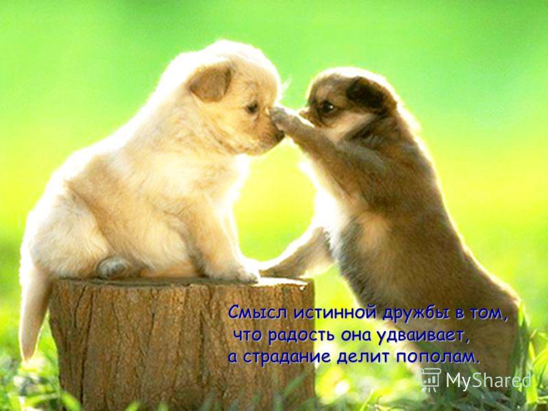 Смысл истинной дружбы в том, что радость она удваивает, что радость она удваивает, а страдание делит пополам.