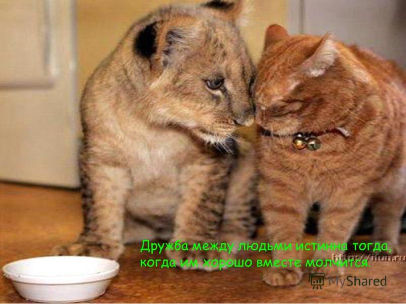 Дружба между людьми истинна тогда, когда им хорошо вместе молчится.