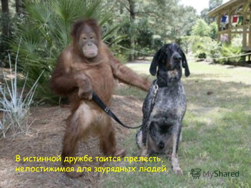 В истинной дружбе таится прелесть, непостижимая для заурядных людей.