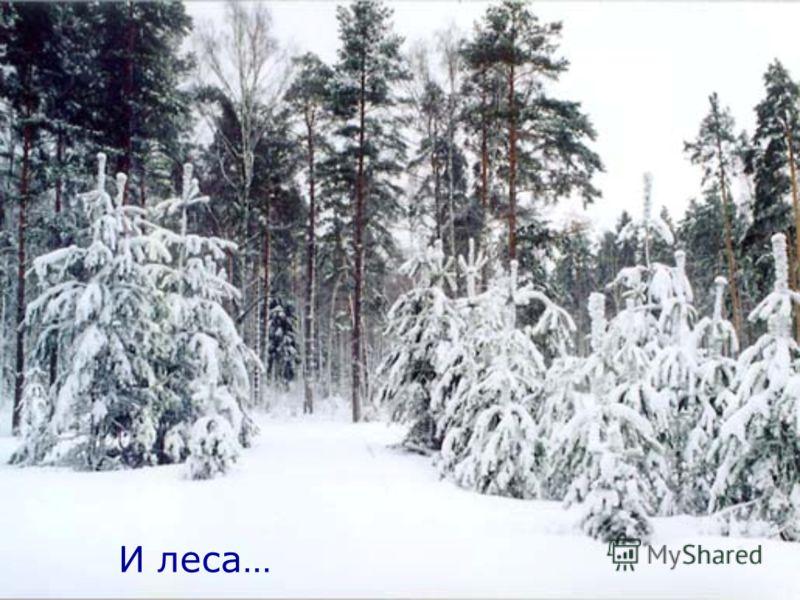 И леса…