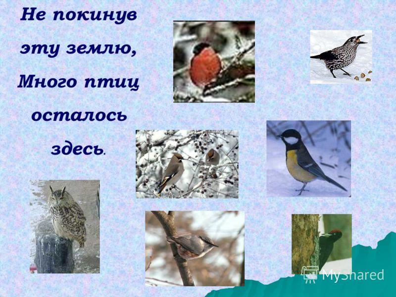Не покинув эту землю, Много птиц осталось здесь.