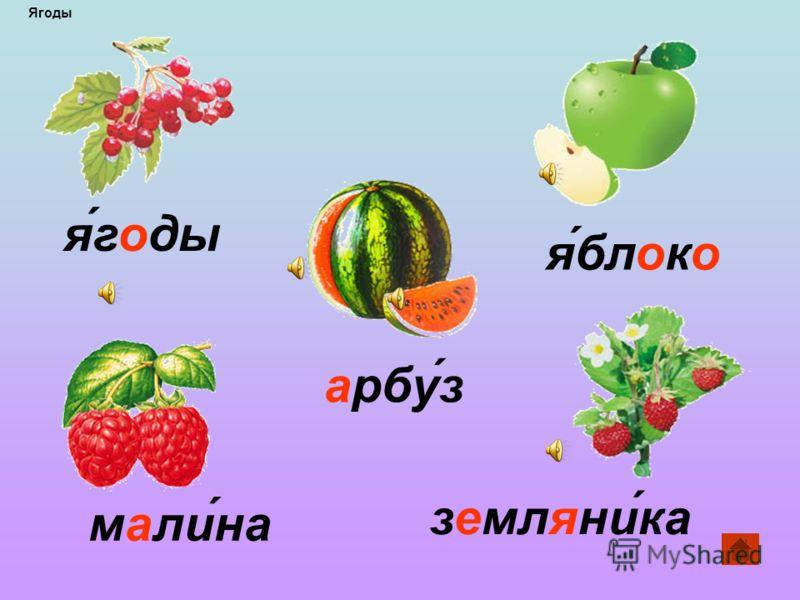 берёза орех горох морковь огурец помидор Растения