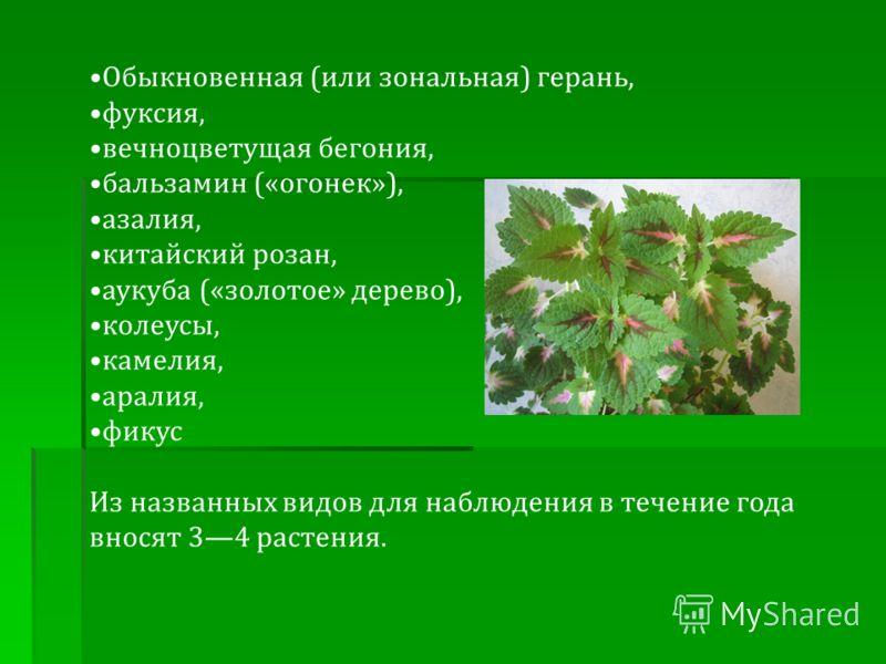 Обыкновенная (или зональная) герань, фуксия, вечноцветущая бегония, бальзамин («огонек»), азалия, китайский розан, аукуба («золотое» дерево), колеусы, камелия, аралия, фикус Из названных видов для наблюдения в течение года вносят 34 растения.