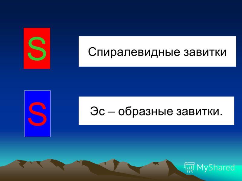 Спиралевидные завитки Эс – образные завитки. S S