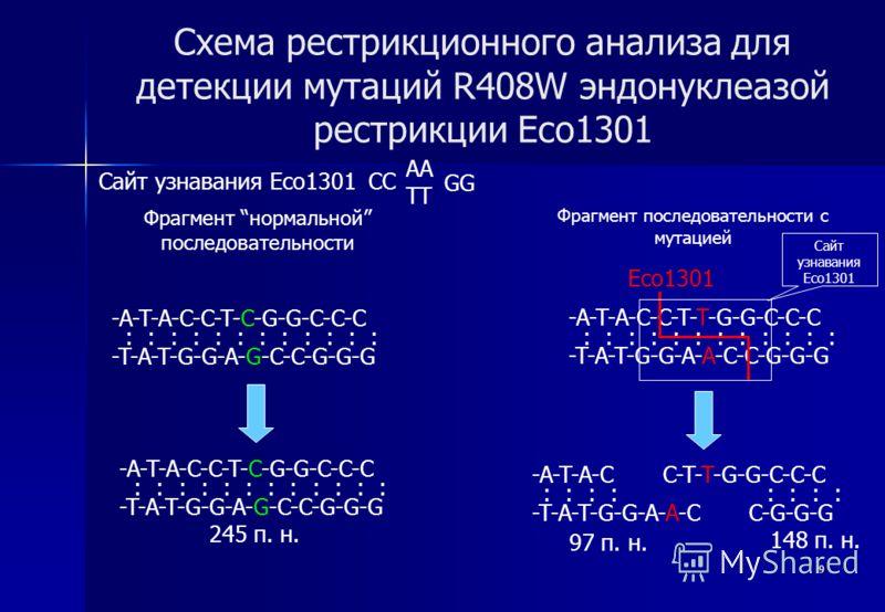 9 Схема рестрикционного анализа для детекции мутаций R408W эндонуклеазой рестрикции Eco1301 Сайт узнавания Eco1301 CC Фрагмент нормальной последовательности Фрагмент последовательности с мутацией -A-T-A-C-C-T-C-G-G-C-C-C -T-A-T-G-G-A-G-C-C-G-G-G : :