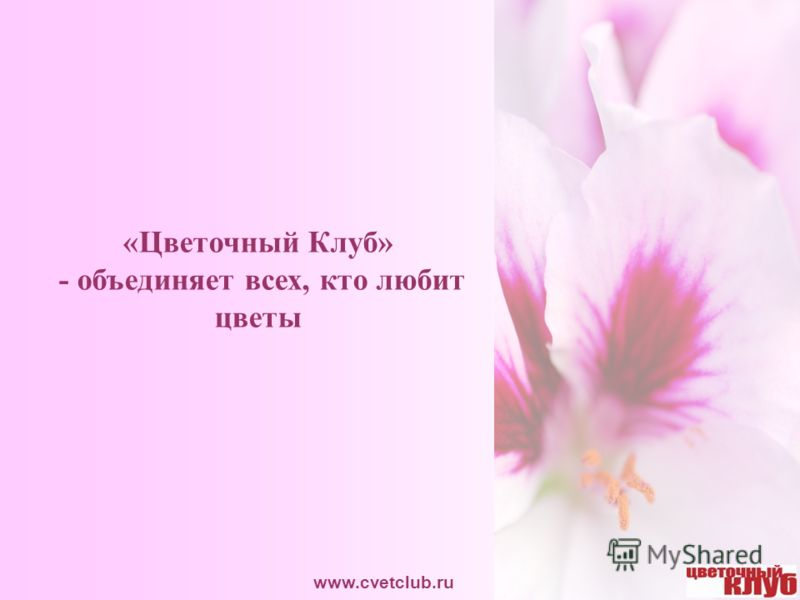 «Цветочный Клуб» - объединяет всех, кто любит цветы www.cvetclub.ru