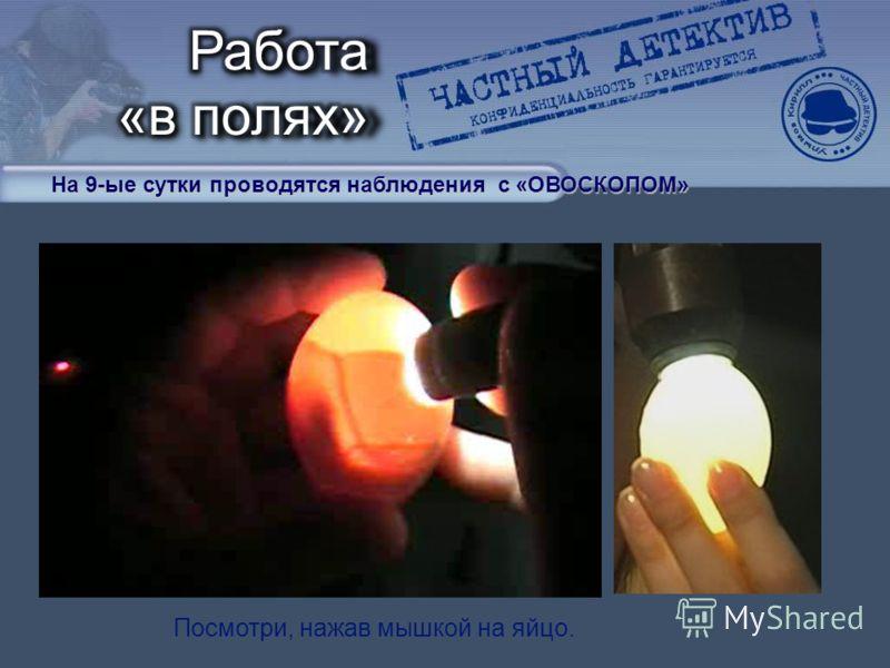 На 9-ые сутки проводятся наблюдения с «ОВОСКОПОМ» Посмотри, нажав мышкой на яйцо.