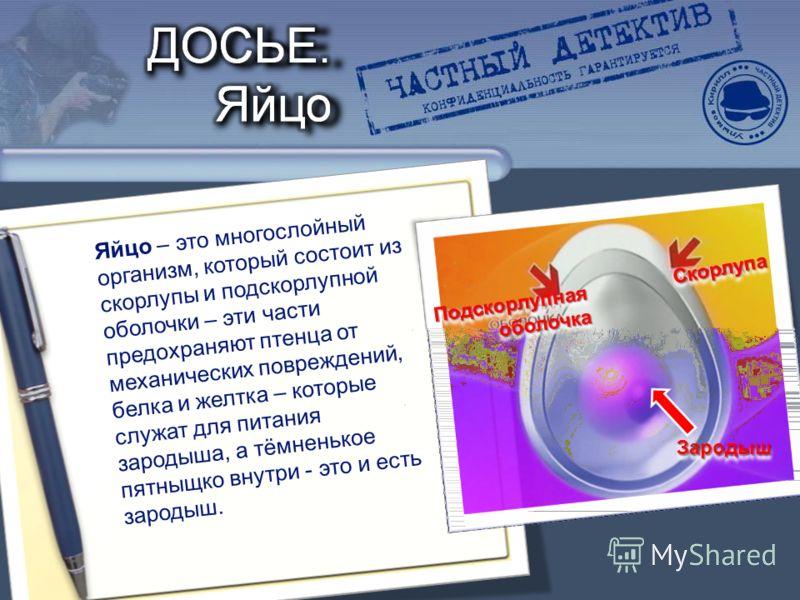 Яйцо – это многослойный организм, который состоит из скорлупы и подскорлупной оболочки – эти части предохраняют птенца от механических повреждений, белка и желтка – которые служат для питания зародыша, а тёмненькое пятныщко внутри - это и есть зароды
