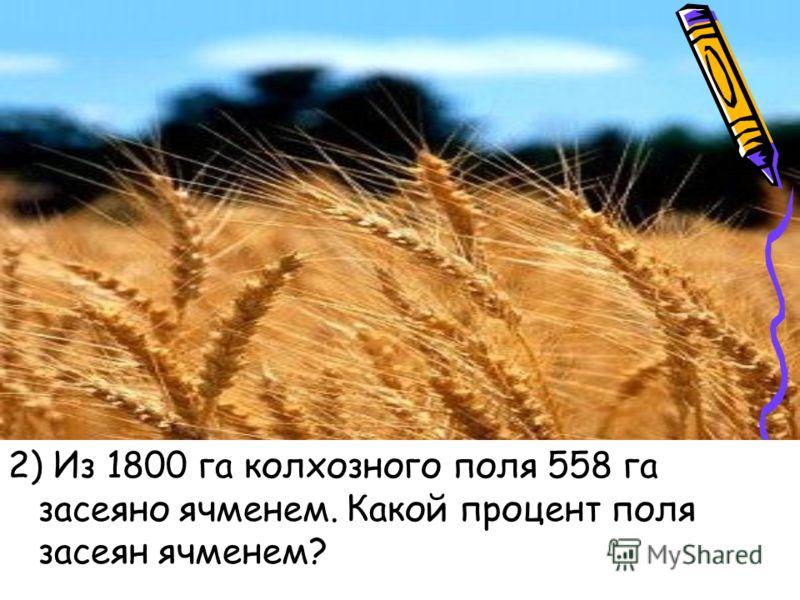 2) Из 1800 га колхозного поля 558 га засеяно ячменем. Какой процент поля засеян ячменем?