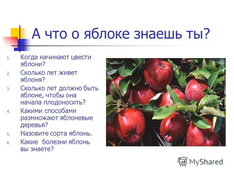 А что о яблоке знаешь ты? 1. Когда начинают цвести яблони? 2. Сколько лет живет яблоня? 3. Сколько лет должно быть яблоне, чтобы она начала плодоносить? 4. Какими способами размножают яблоневые деревья? 5. Назовите сорта яблонь. 6. Какие болезни ябло