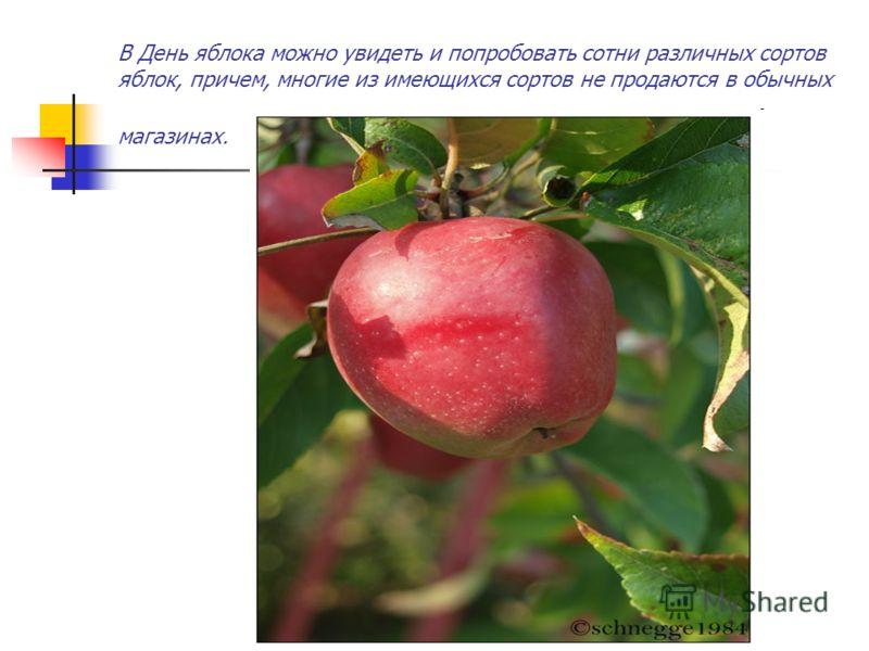 В День яблока можно увидеть и попробовать сотни различных сортов яблок, причем, многие из имеющихся сортов не продаются в обычных магазинах.