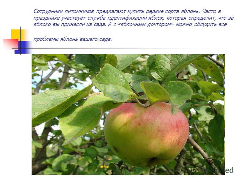 Сотрудники питомников предлагают купить редкие сорта яблонь. Часто в празднике участвует служба идентификации яблок, которая определит, что за яблоко вы принесли из сада. А с «яблочным доктором» можно обсудить все проблемы яблонь вашего сада.