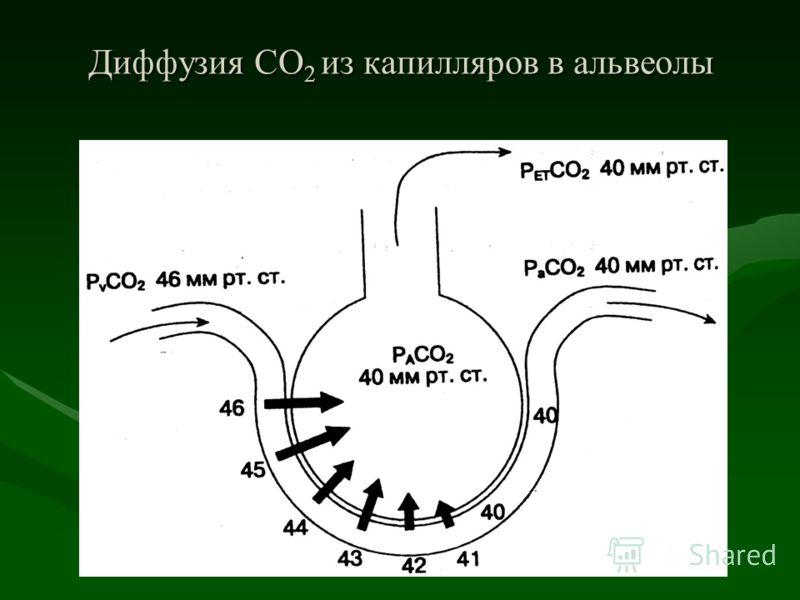 Диффузия СО 2 из капилляров в альвеолы